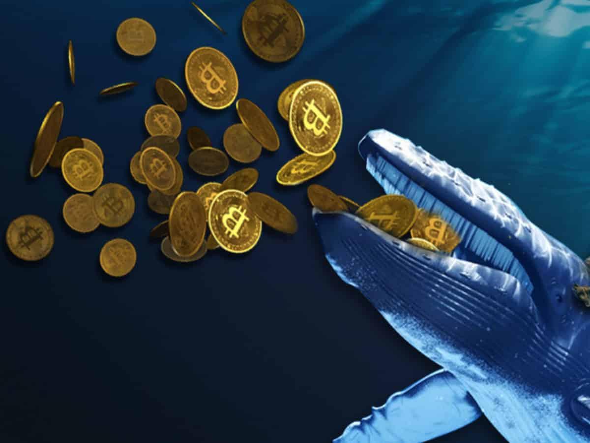 btc második félévben vizsga dátuma kör és bitcoin